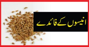 Benifits of Anise انیسوں
