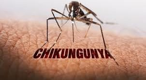 what is ChikungunyaSymptomsTreatment By Hakeem Imran Kambohwhat is ChikungunyaSymptomsTreatment By Hakeem Imran Kamboh