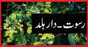 Berberis aristata :رسوت۔ دارہلد