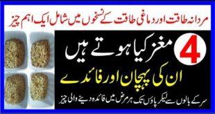 Char Maghaz Kiya Hoty Hain In Ki Pehchan Aur Faidy|چار مغز کی پہچان اور فائدے